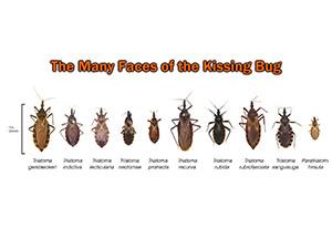 Deadly Bugs?: San Antonio Pets & Vets