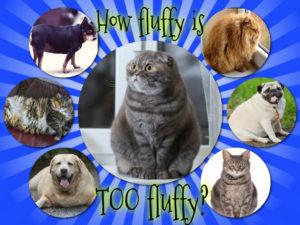 Obesity in Pets: San Antonio Pets & Vets