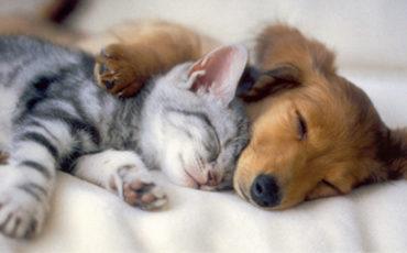 Puppy / Kitten