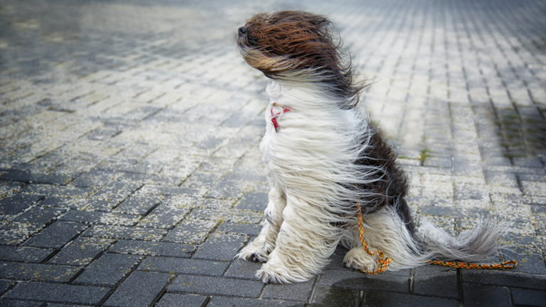 Windy conditions and pets | San Antonio Pets & Vets