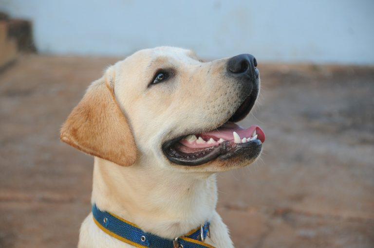 Love your pet's teeth | San Antonio Pets & Vets